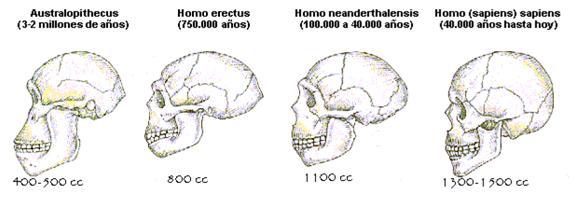 hominidos3
