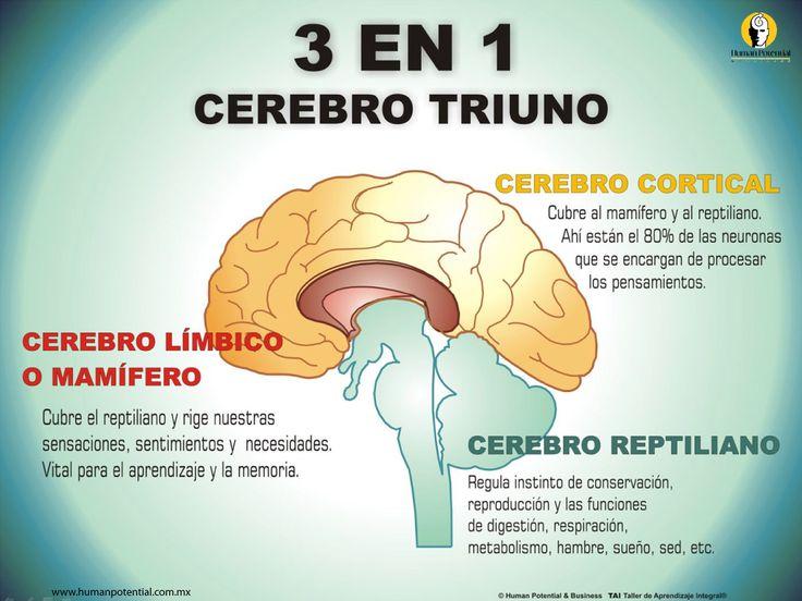 Cerebro_triuno
