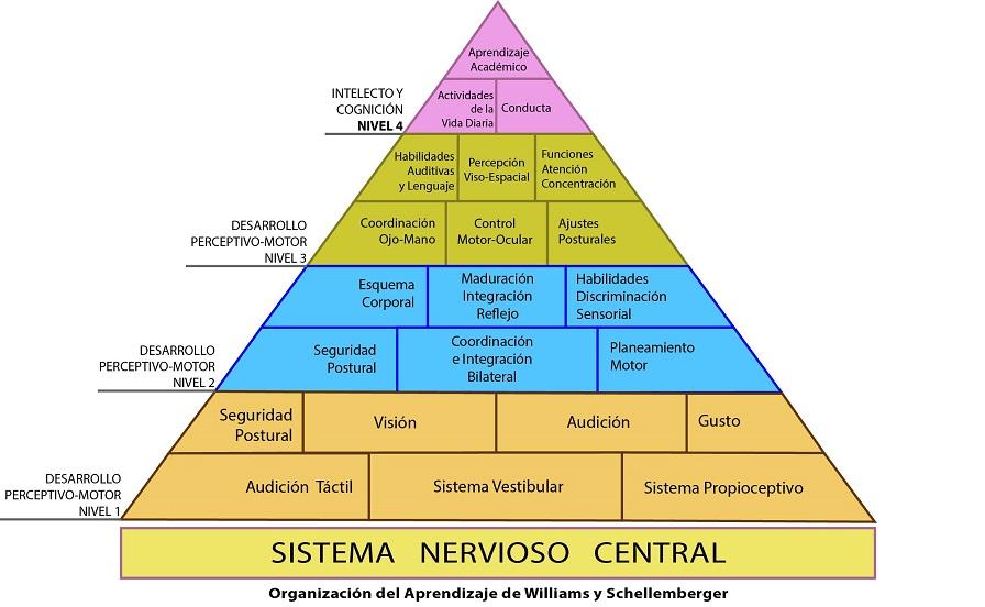 organizacion del aprendizaje